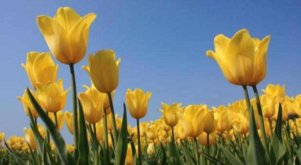 Supernatural Encounters: Smelling the Fragrance of God