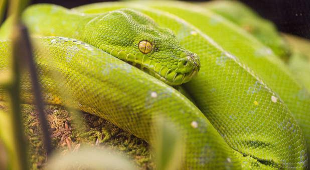 What the Python Spirit Really Wants | Awakening Magazine