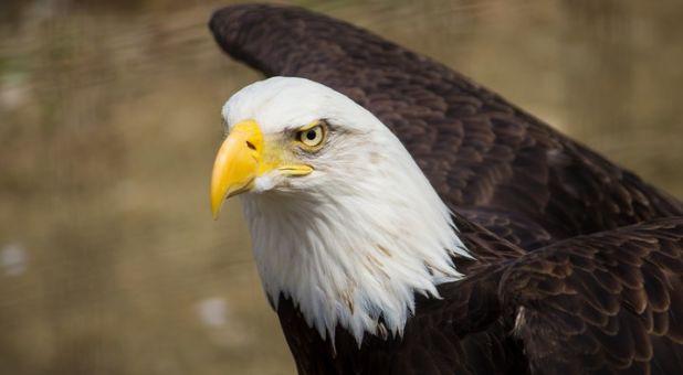 Soaring Eagles & Church of Philadelphia Part 1