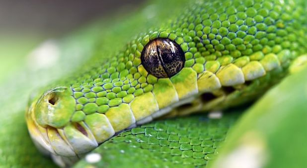 Surviving The Snake Bites