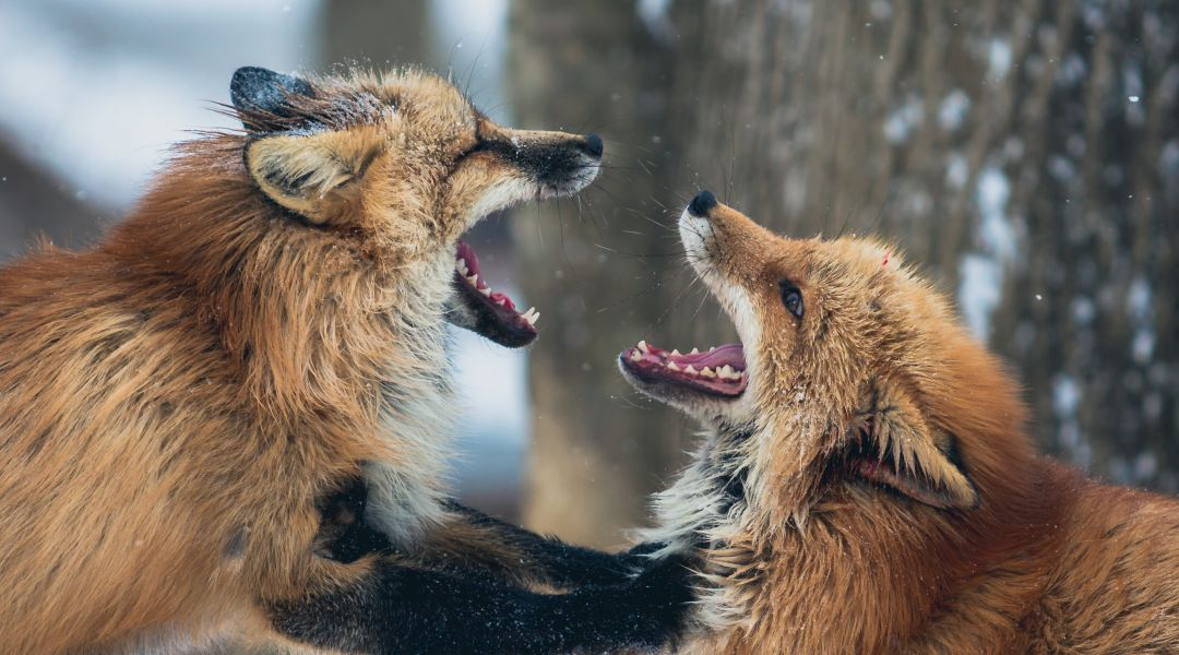 Sometimes, believers fight like wolves during times of separation. This grieves the Lord.